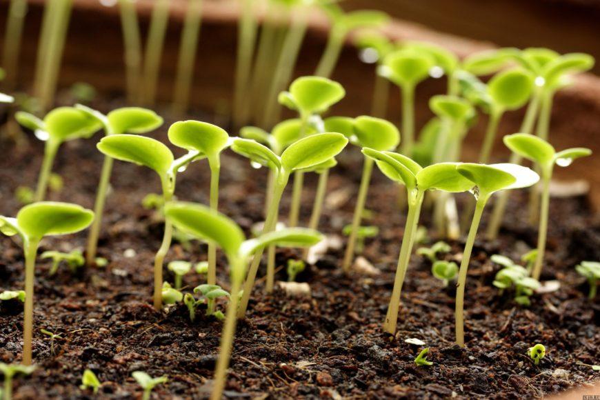 Семена сеют или сажают 275