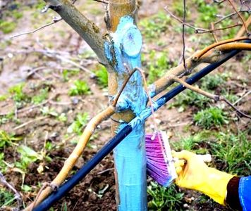 обработка деревьев бордосской жидкостью