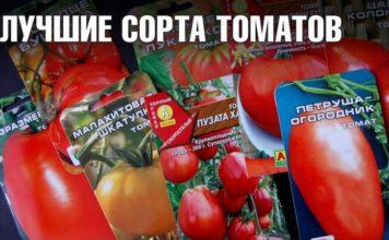Лучшие сорта помидор с фото