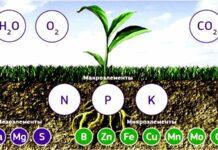 элементы питания для растений