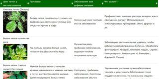 таблица диагностики пятна томатов