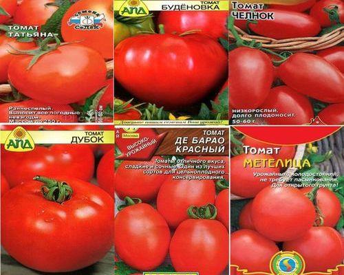 устойчивые к фитофторе томаты