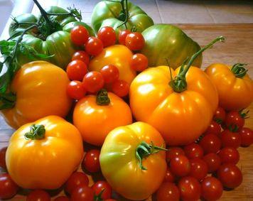 томаты для открытого грунта-2