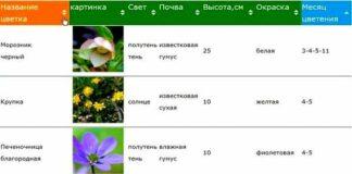 календарь цветения многолетников таблица