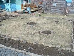 Посадка газона весной, осенью - посев и уход