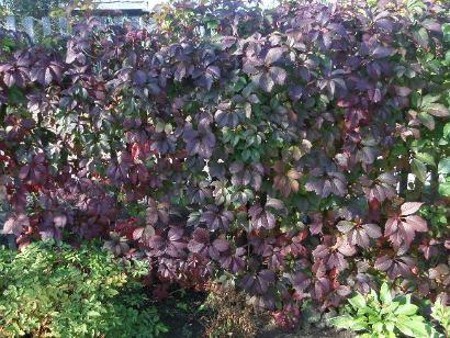 Опоры для вьющихся растений и цветов - с фото