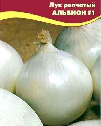 лук репчатый альбион