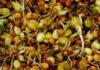 как ускорить всходы семян
