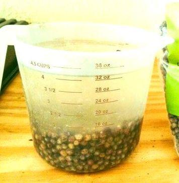 как ускорить всхожесть семян