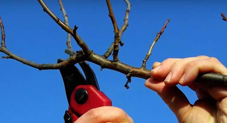 обрезать деревья в апреле