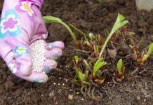 подкормка клубники весной