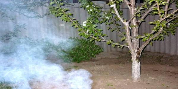 защита от весенних заморозков