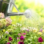Правильный полив огорода