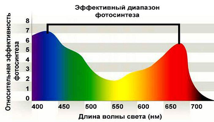 Эффективный диапазон фотосинтеза