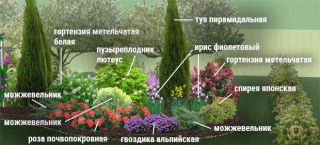 Клумбы непрерывного цветения-4
