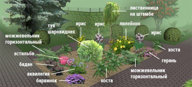 Клумбы непрерывного цветения-6