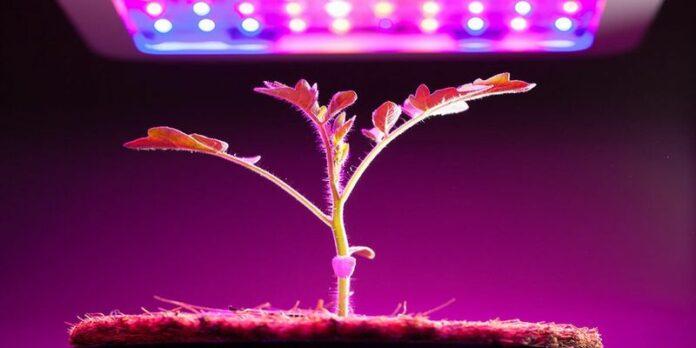 как досвечивать рассаду
