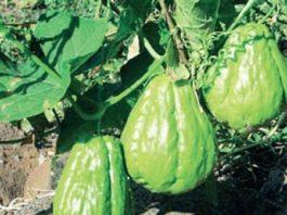 необычные овощи для любителей экзотики