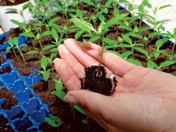 овощи рассадой-1