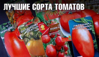 Крупные томаты для открытого грунта