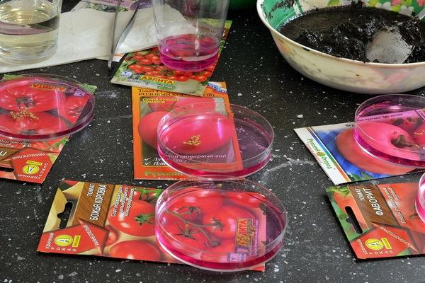 как обработать семена томатов перед посевом на рассаду