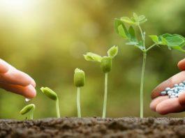 как вносить удобрения