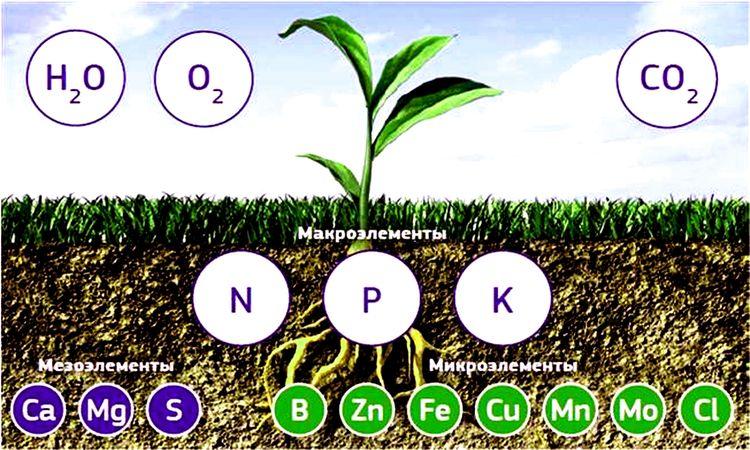 Микроэлементы для растений [дефицит или избыток]