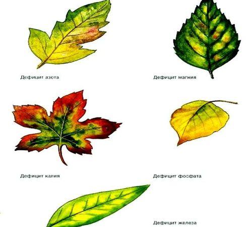 недостаток микроэлементов растений