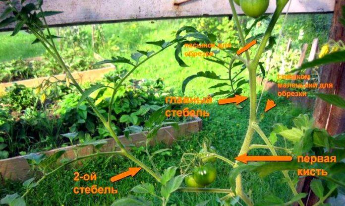 пасынкование помидор