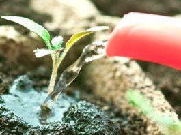 использование удобрений для рассады