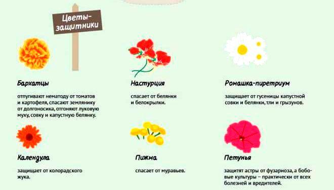 цветы-защитники