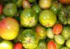 дозревание помидор