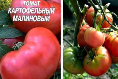 ТоматКартофельный малиновый