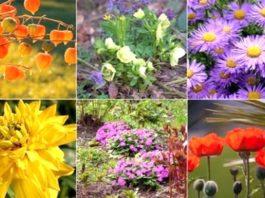 какие цветы сажают осенью