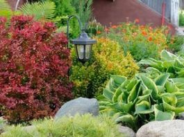 Красивый сад малого ухода