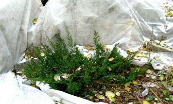 Можно ли мхом укрывать растения на зиму