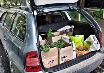перевозка саженцев на легковом автомобиле