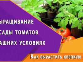Как вырастить крепкую рассаду дома