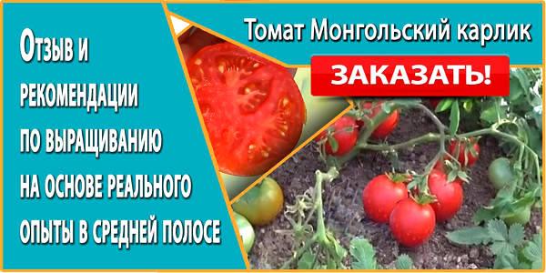 Томат монгольский карлик отзывы фото урожайность