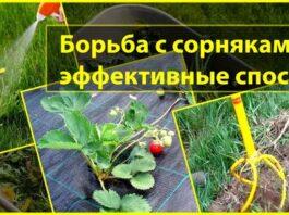 Борьба с сорняками эффективные способы