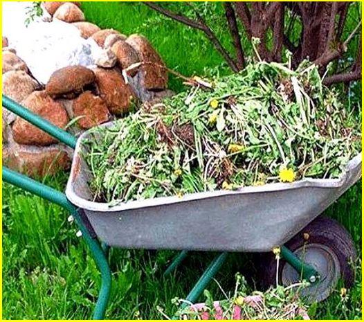 увозить сорняки с участка